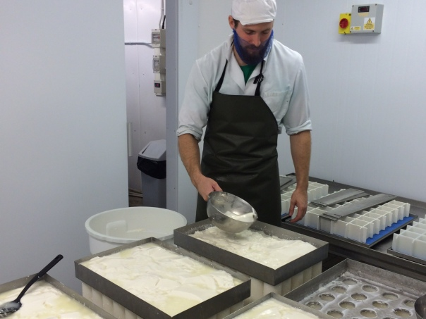 Matt preparing the curd into the moulds for Golden Cross