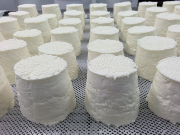 Chabis goat cheese just taken out of moulds