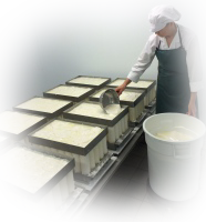 Ali ladling the curd into the moulds for Golden Cross
